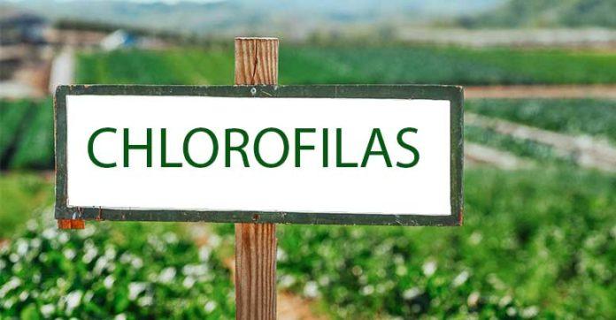 chlorofilas