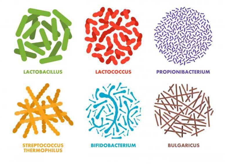 probiotiku rusys
